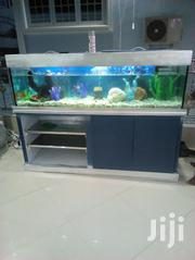 6feet Aquarium For Sale With Live Fishes | Fish for sale in Volta Region, South Tongu