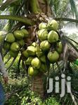 Dwarf Coconuts | Livestock & Poultry for sale in Tesano, Greater Accra, Nigeria