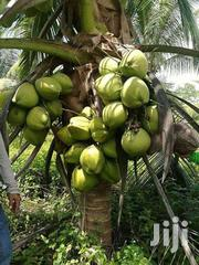Dwarf Coconuts | Livestock & Poultry for sale in Greater Accra, Tesano