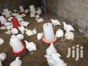 Christmas Chicken | Livestock & Poultry for sale in Eastern Region, New-Juaben Municipal
