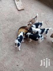 Baby Female Mixed Breed Mongrel (No Breed) | Dogs & Puppies for sale in Greater Accra, Tema Metropolitan