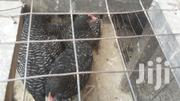 Healthy Cockrels | Livestock & Poultry for sale in Greater Accra, Adabraka