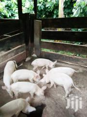 Piggery For Sale | Livestock & Poultry for sale in Ashanti, Adansi South