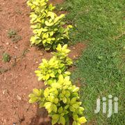 Home Gardens | Landscaping & Gardening Services for sale in Greater Accra, East Legon (Okponglo)
