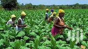 Farming Made Easy | Other Services for sale in Greater Accra, Ga East Municipal