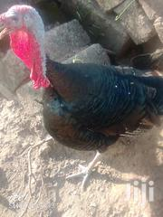 Xmas Turkeys For Sale | Livestock & Poultry for sale in Brong Ahafo, Sunyani Municipal