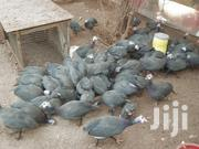 Guinea Fowl   Other Animals for sale in Greater Accra, Achimota