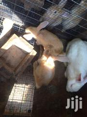 Bunnies (Rabbit) | Other Animals for sale in Greater Accra, Kwashieman