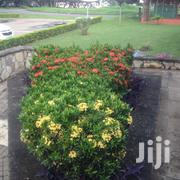 Parks And Garden Services | Landscaping & Gardening Services for sale in Greater Accra, Cantonments