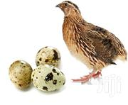 Quality Organic Quail Eggs | Livestock & Poultry for sale in Eastern Region, Akuapim South Municipal