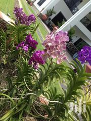 Grow Orchid/ Landscape (G.O. L)Limited | Landscaping & Gardening Services for sale in Greater Accra, Achimota