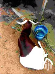 Sheep For Sale | Meals & Drinks for sale in Northern Region, Yendi