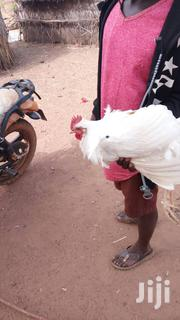 Hen's For Sale | Livestock & Poultry for sale in Northern Region, Yendi