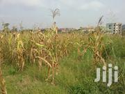 Plot of Land for Sale at Kwadaso Agric College   Land & Plots For Sale for sale in Ashanti, Kumasi Metropolitan