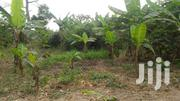Litigation Free Land For Sale | Land & Plots For Sale for sale in Eastern Region, Kwahu South