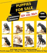 Doberman/Boerboel Puppies For Sale | Dogs & Puppies for sale in Greater Accra, Tema Metropolitan