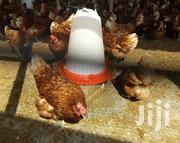 Chickens | Livestock & Poultry for sale in Greater Accra, Ashaiman Municipal