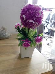 Affordable Flowers | Garden for sale in Greater Accra, Kokomlemle