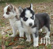 Baby Female Purebred Siberian Husky | Dogs & Puppies for sale in Greater Accra, North Kaneshie