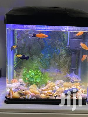 Aquarium With Live Fishes For Sale