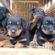 Baby Male Purebred Rottweiler | Dogs & Puppies for sale in Greater Accra, Ga West Municipal