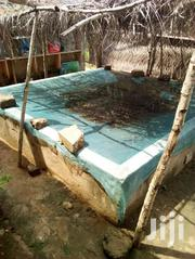 Nice Aquariums Going For Affordable Prices And Backyard Fish Farming | Fish for sale in Greater Accra, Teshie new Town
