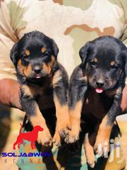 Baby Female Purebred Rottweiler | Dogs & Puppies for sale in Greater Accra, Dansoman
