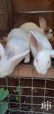 Rabbits For Sale | Livestock & Poultry for sale in Greater Accra, Tema Metropolitan