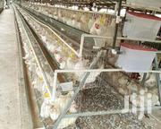 Chicken Cage System | Farm Machinery & Equipment for sale in Greater Accra, Cantonments