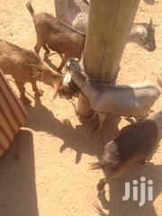 Goats | Livestock & Poultry for sale in Northern Region, Central Gonja