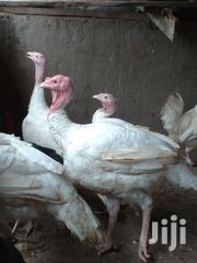 Turkey Promotion | Livestock & Poultry for sale in Greater Accra, Ashaiman Municipal