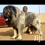 Dog Grooming | Pet Services for sale in Greater Accra, North Kaneshie