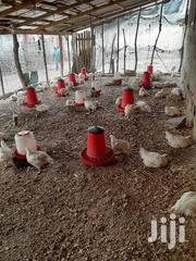 Broilers For Sale | Livestock & Poultry for sale in Greater Accra, Ashaiman Municipal