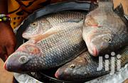 Fresh And Healthy Tilapia From Volta Lake | Livestock & Poultry for sale in Greater Accra, Dansoman