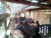 Poultry Farming | Livestock & Poultry for sale in Central Region, Gomoa East