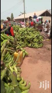 Plantain To Ur Door Step | Feeds, Supplements & Seeds for sale in Greater Accra, Achimota
