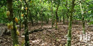 50 Acres Cocoa Farm For 30yrs Lease