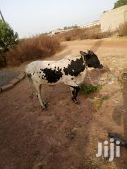 Cow For Seller | Other Animals for sale in Northern Region, Gushegu