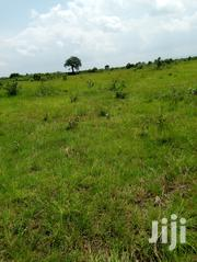 Farming Land 4 Long Lease&Sale Asutsuare,Nsawam,Sogakope | Land & Plots for Rent for sale in Greater Accra, Adenta Municipal