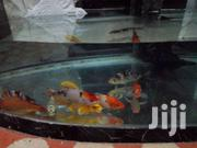 Aquarium Fish | Pet's Accessories for sale in Western Region, Shama Ahanta East Metropolitan