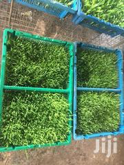 Hydroponic Fodder Feed Supplements | Feeds, Supplements & Seeds for sale in Ashanti, Obuasi Municipal
