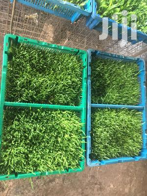 Hydroponic Fodder Feed Supplements