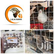 Organic Quail Eggs For Sale | Meals & Drinks for sale in Greater Accra, Osu