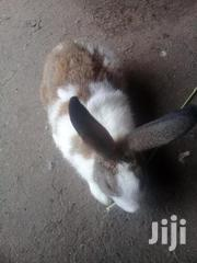 Rabbit For Sell | Other Animals for sale in Greater Accra, Osu