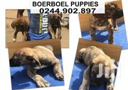 Young Male Purebred Boerboel | Dogs & Puppies for sale in Greater Accra, South Labadi