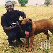 Dog Trainer | Pet Services for sale in Ashanti, Kumasi Metropolitan