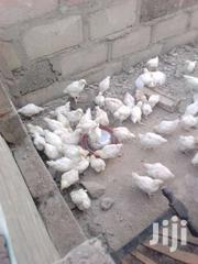 11 Weeks Old Cockerels | Livestock & Poultry for sale in Northern Region, Tamale Municipal