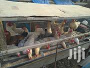White Cock | Livestock & Poultry for sale in Greater Accra, Kwashieman