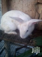 Rabbit For Sale | Livestock & Poultry for sale in Ashanti, Bekwai Municipal