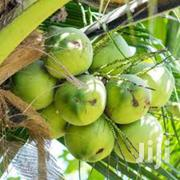 Coconut Distributor   Manual Labour Jobs for sale in Greater Accra, Dansoman